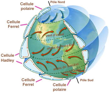 Circulation Terre cellule